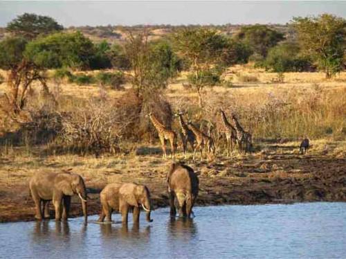 دریاچه های آفریقا