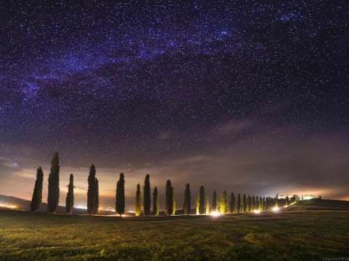 ستاره های شب