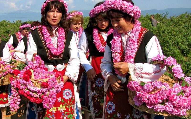 حقایقی از بلغارستان - مزارع گل رز