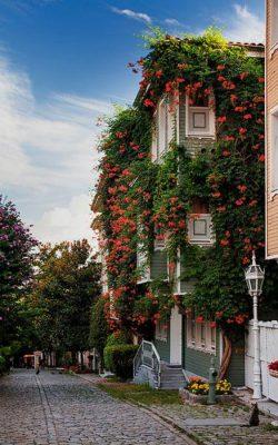 خانه ای پوشیده از گل