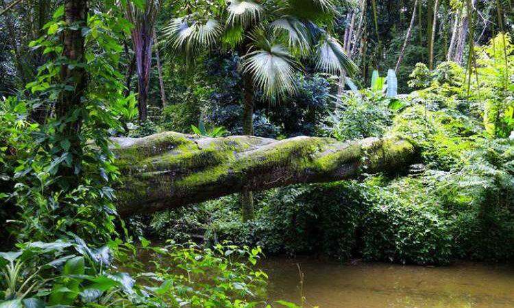 جنگل تیجوکا