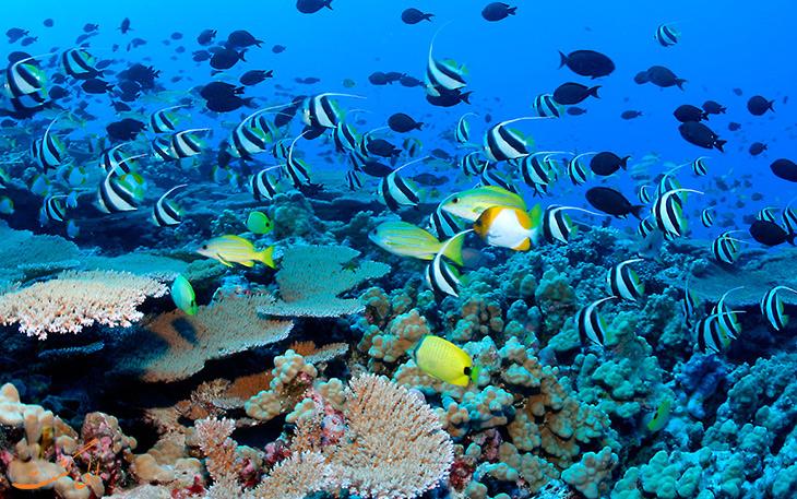 ساحل مرجانی