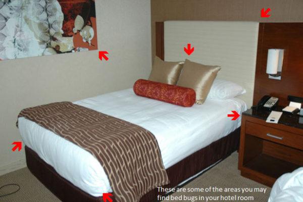 دوری از حشرات در اتاق های هتل