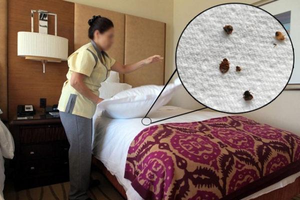 دوری از حشرات در هتل