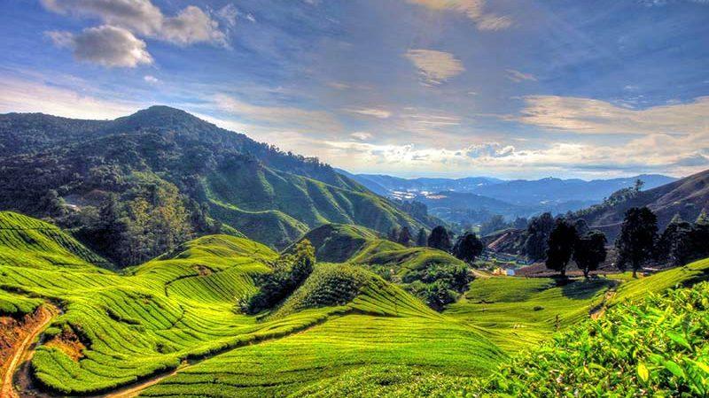 ارتفاعات کامرون، طبیعت فوق العاده مالزی