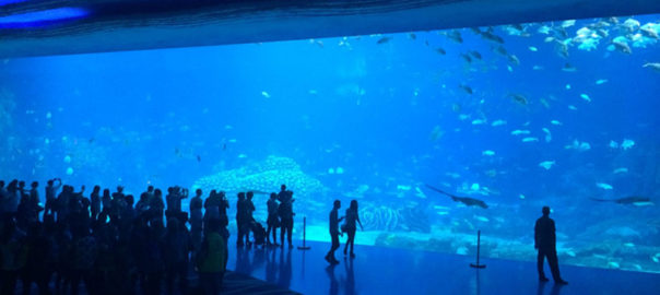 Chimelong Ocean Kingdom