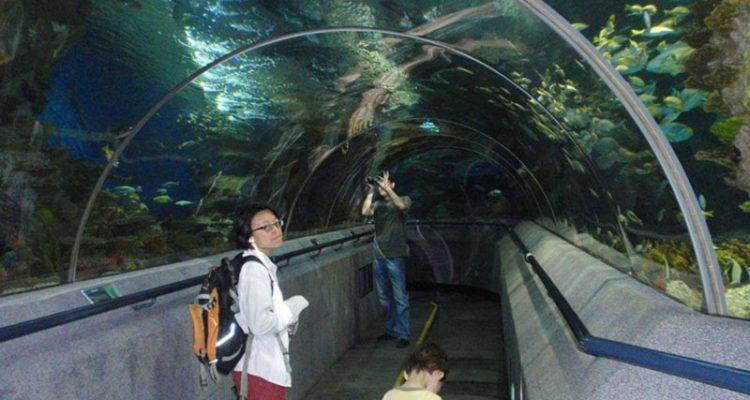 پارک Dalian Shengya Ocean World