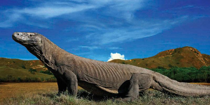 پارک ملی کومودو Komodo