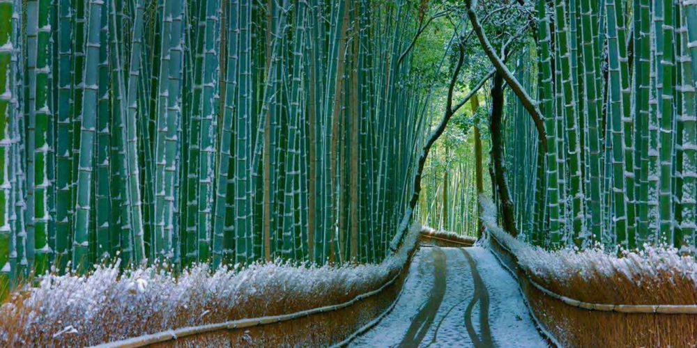 Sagano-Bamboo-Forest