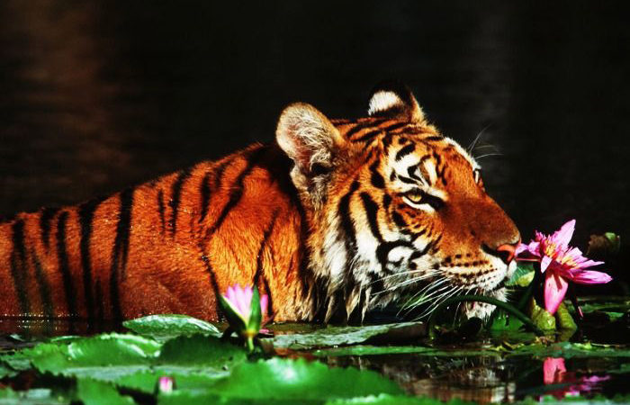 Sunderbans National Park, West Bengal