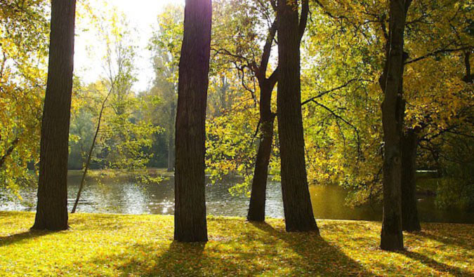 طبیعت آمستردام