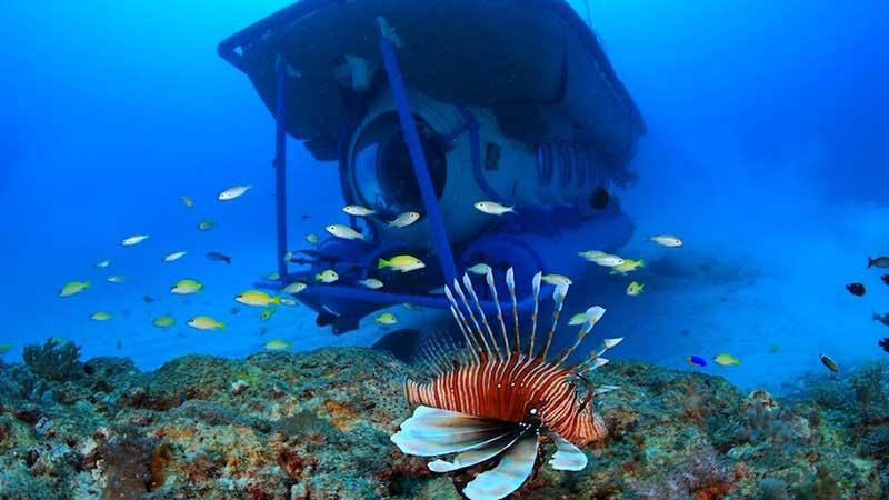 safari submarine