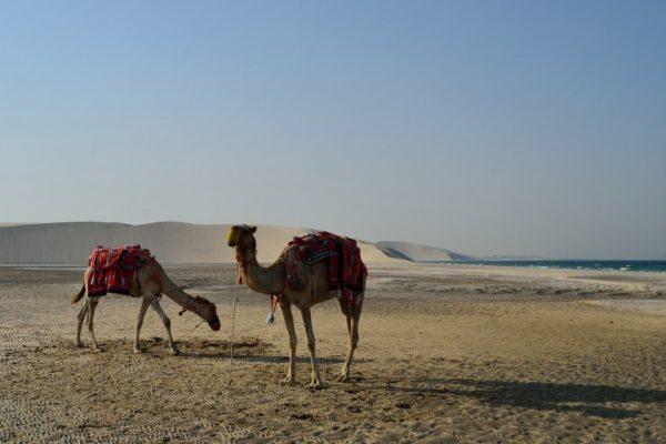 desert-safari-in-doha-qatar-780x517
