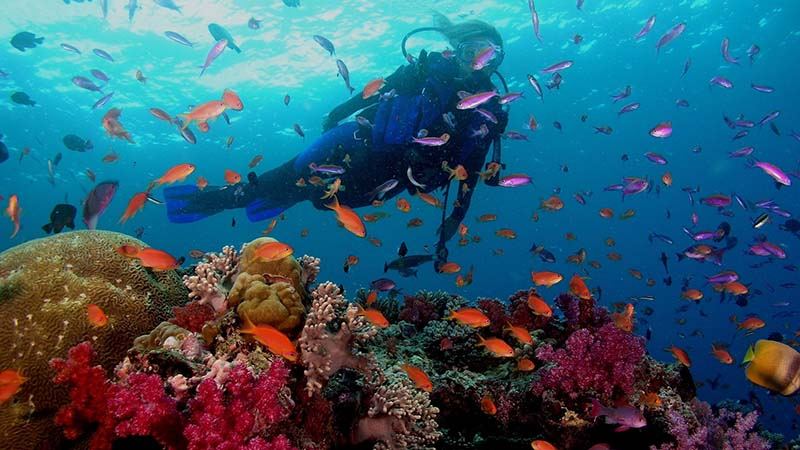 Travel to goa and diving