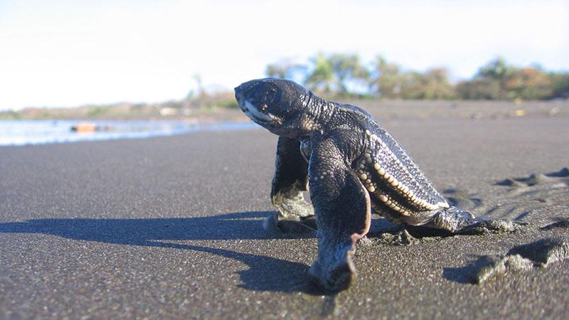 turtle conservation bentota