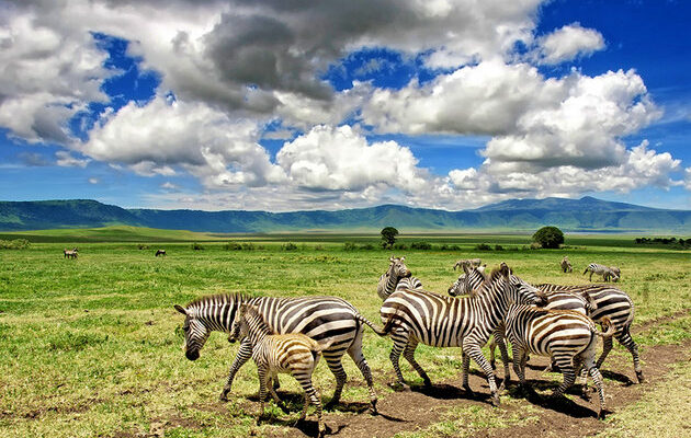 africa-best-game-reserves-ngorongoro