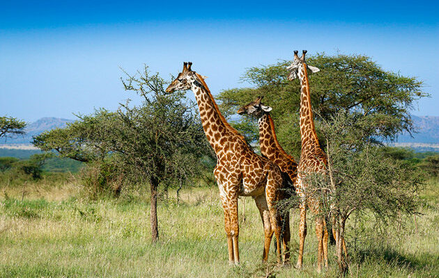 africa-best-game-reserves-serengeti