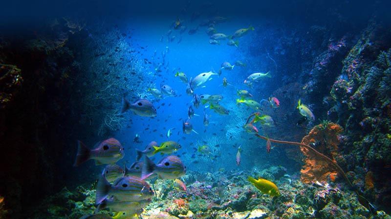 diving phi phi island krabi
