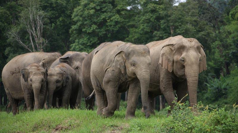 مراقب فیل ها باشیم