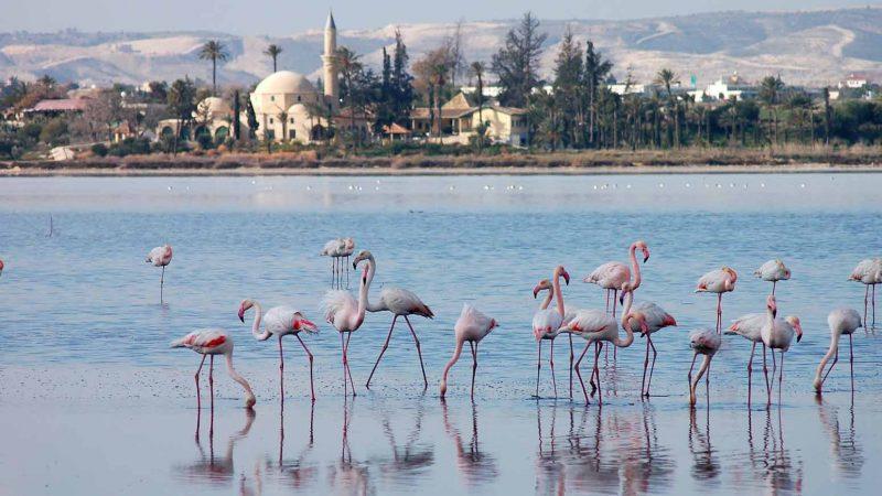 larnaca salt lakes
