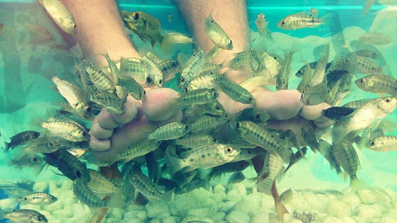 Foot massage with fish
