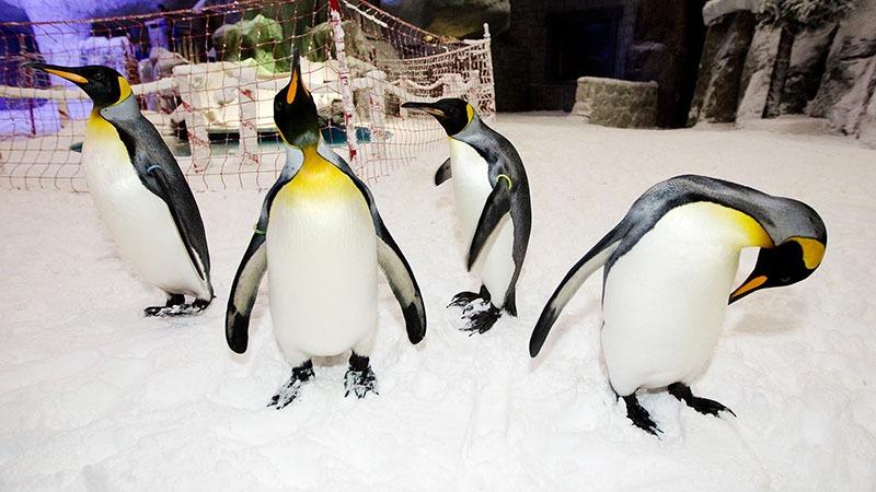 penguin dubai
