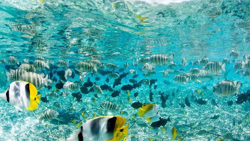 bora bora coral gardens