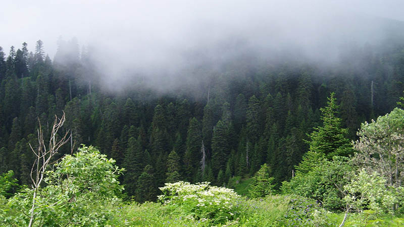 sochi national park2