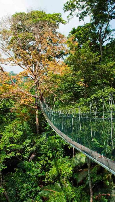 canopy-walkway-forest-research-institute-malaysia