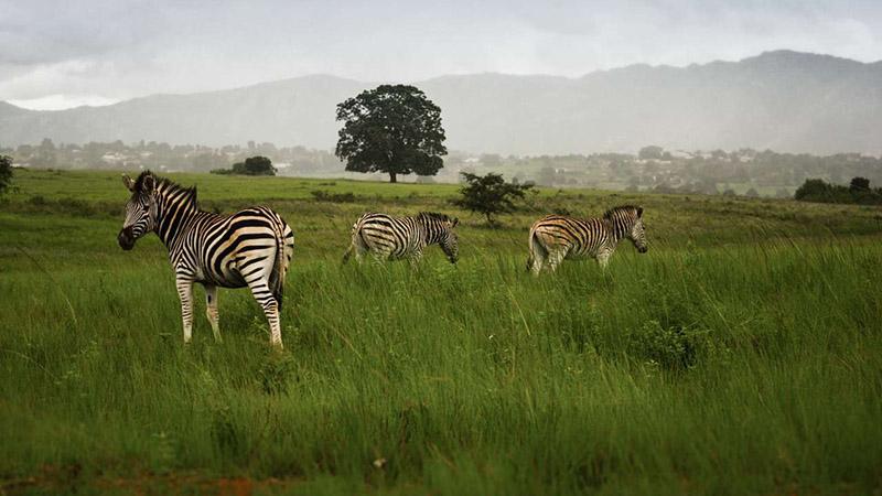 پارک ملی میلوان آفریقای جنوبی