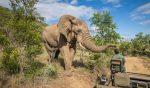 با سفر به این جاذبه های آفریقای جنوبی، لبریز از هیجان شوید