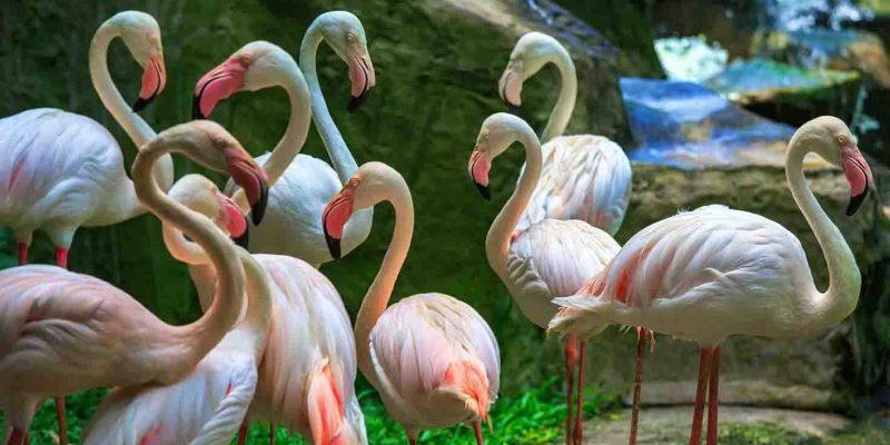 flamingos-kl-bird-park-malaysia_cs
