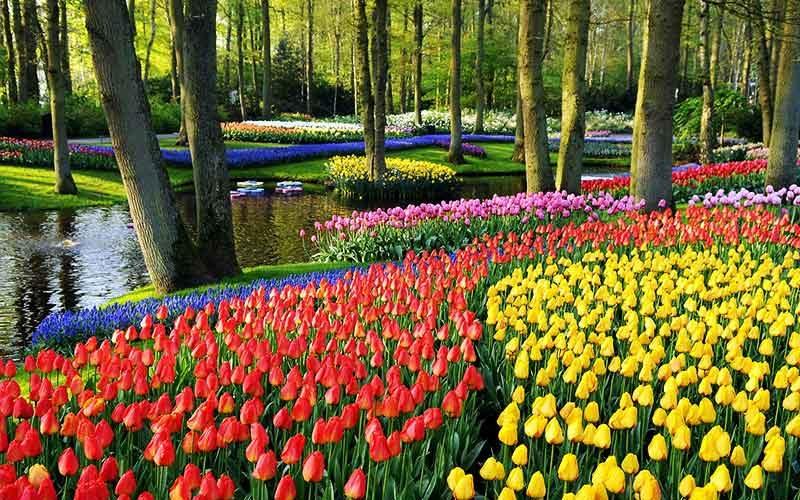 باغ گیاه شناسی آمستردام