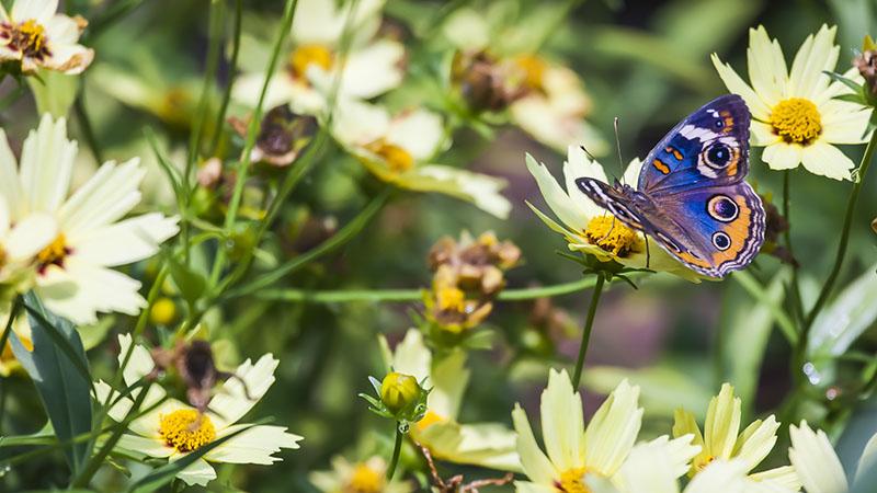 پروانه ای کمیاب در باغ پروانه های بانکوک