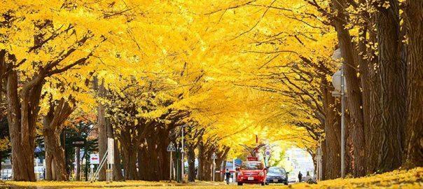 تونل درختی جینکو
