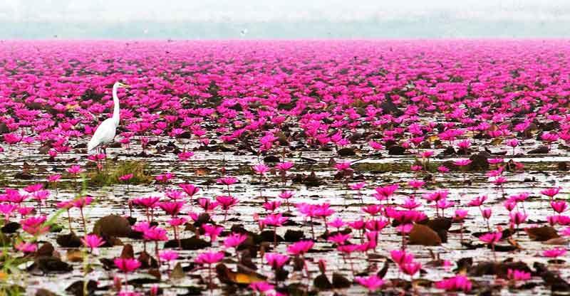 دریاچه زیبای تایلند