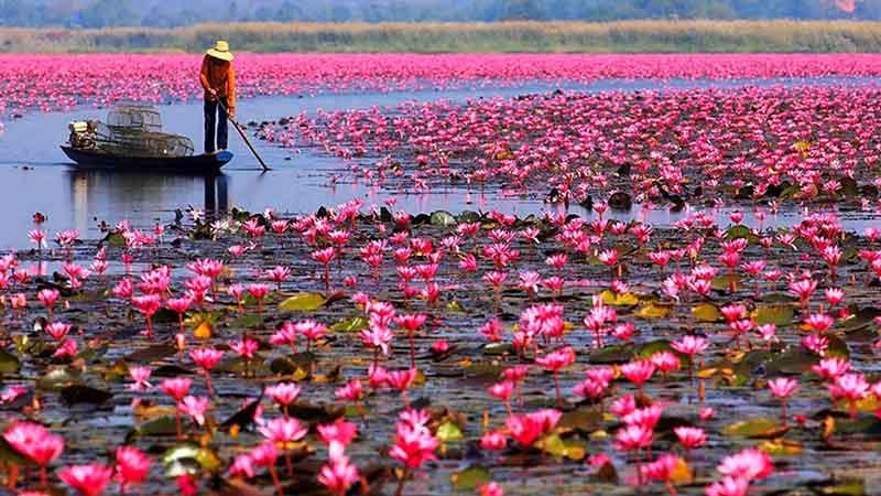 دریاچه تایلند