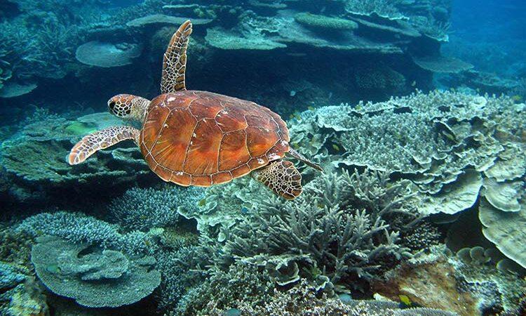 دیوار بزرگ مرجانی، استرالیا - غواصی