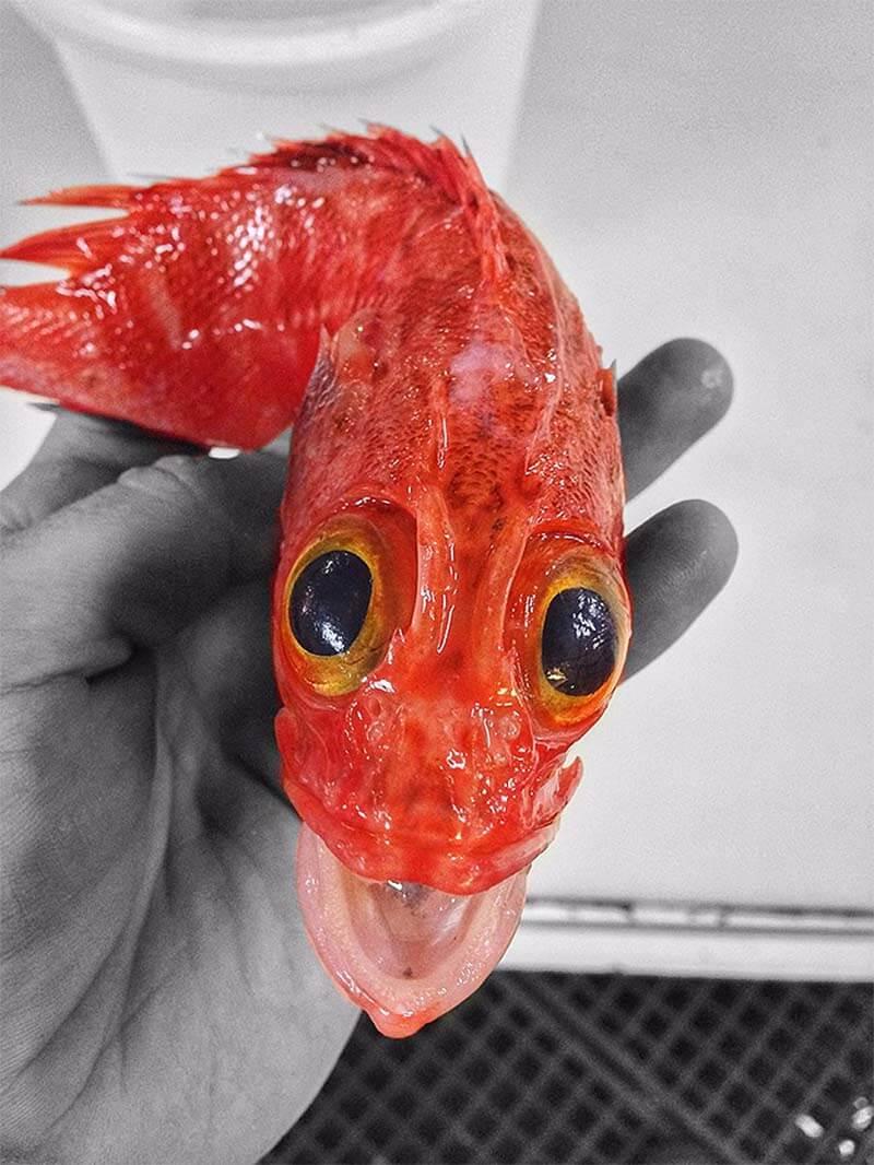 یک گونه ی ناشناخته ماهی