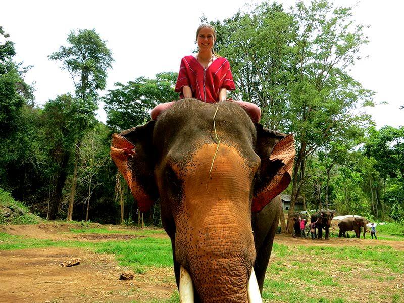 سوار شدن روی فیل | تایلند