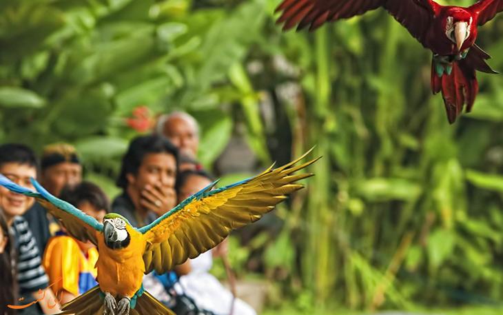 پارک پرندگان بالی