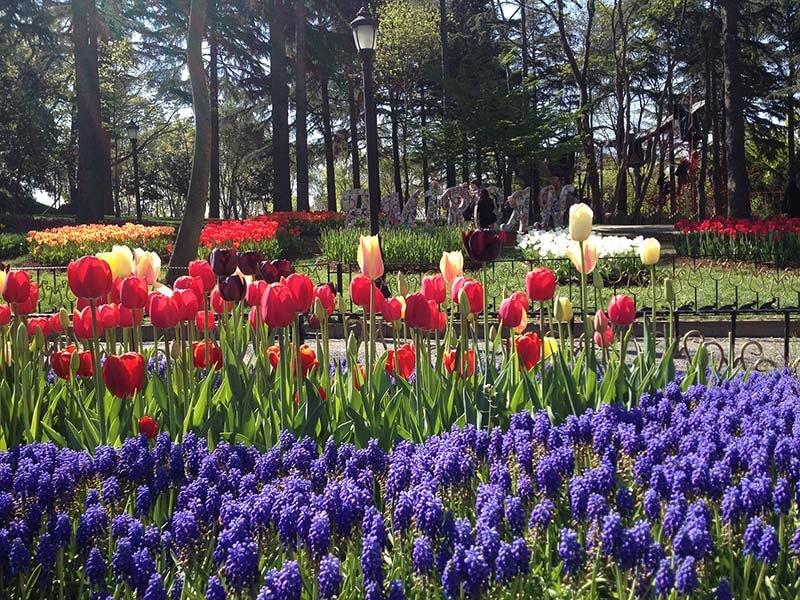 تصویری دیگر از جشنواره گل لاله