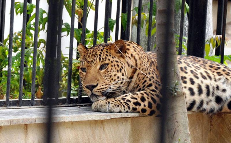 حیوانات باغ وحش باکو