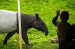 تماشای حیات وحش در باغ وحش باکو