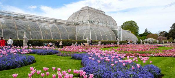 باغ گیاه شناسی کیو