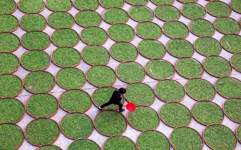 مزارع زیبای چای