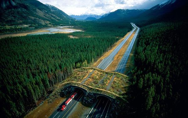 پل حیوانات در پارک ملی Bnaff در کانادا