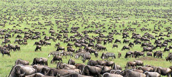 عکس های مهاجرت حیوانات