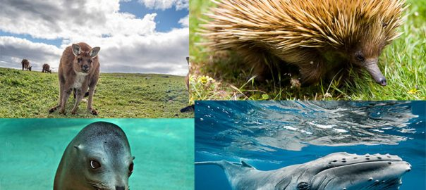 حیات وحش استرالیا