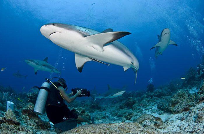 غواصی در مالدیو